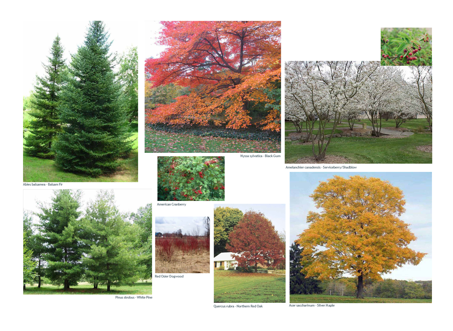 WSTN Proposed native trees and shrubs